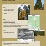 Touristikkonzept Mammutbaumbestand Lorch
